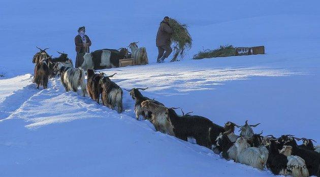 Besicilerin kara kışta zorlu yolculuğu