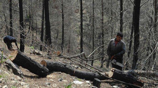 Devletten orman köylülerine hibe